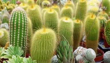 Landscape Design Phoenix Cactus Nursery