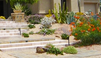Landscape Design Phoenix and Scottsdale