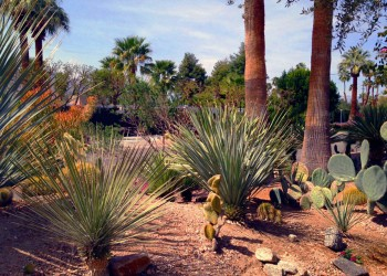 desert-landscaping-design-phoenix