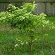 rrgfruit404