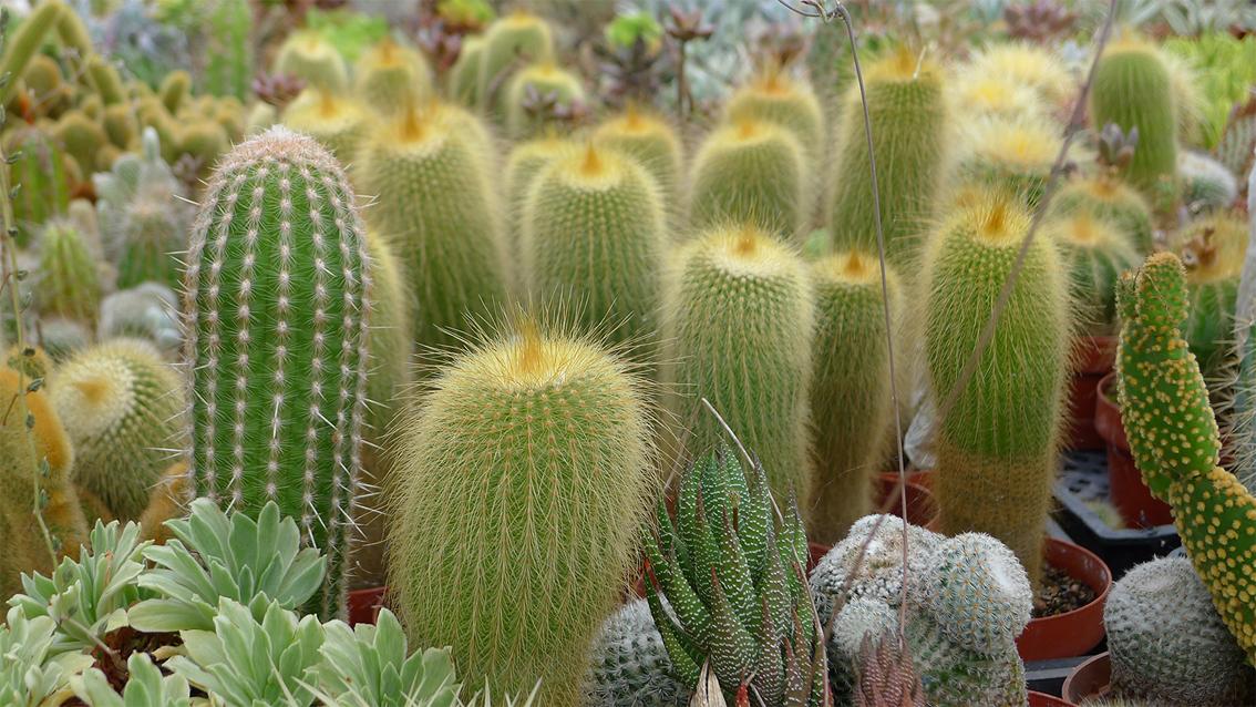 Cactus Nursery Phoenix Scottsdale