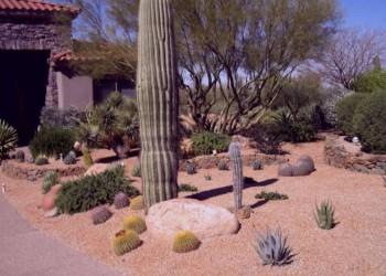 large-desertcrestllc-landscape-in-az-09